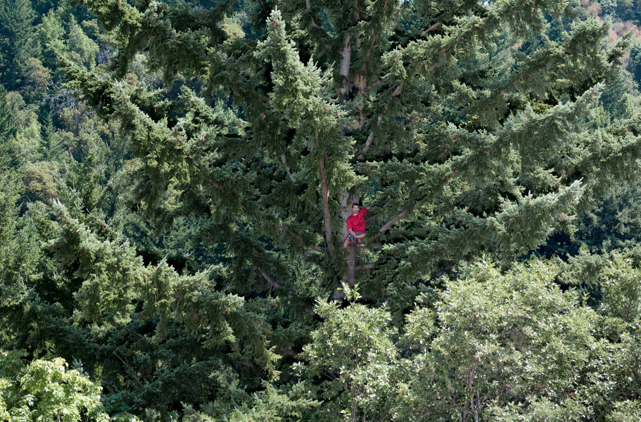100803_WSJ_TreeClimber-002902-website